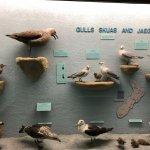 birds of NZ