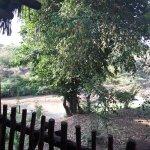Photo de Mara Simba Lodge