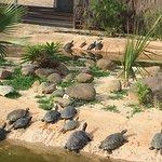 Photo of Crocodile Park