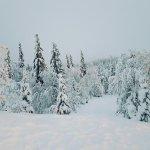 Snowy Wilderness Lodge grounds