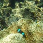 Escursione le 4 perle,snorkeling