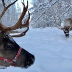 Foto de Running Reindeer Ranch