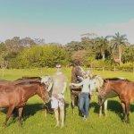 Happy New Year to OUR HORSES: Cinderella, Sunshine, Julian,  Galan,  Mambo, Native & Maria.