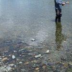 On the Mataura River