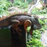 Zdjęcie Reptile Park