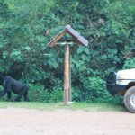 Photo of Sanctuary Gorilla Forest Camp