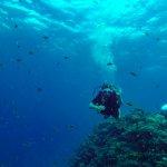 Photo of Colona Divers