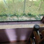 Window ledge post check in..full of flies