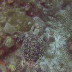 Foto de Ecologic Divers