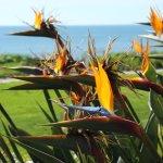 Foto de Marisol at the Cliffs