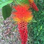 Foto de Arasha Tropical Rainforest Resort & Spa