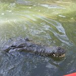 Photo of Crocodile Man Tours