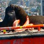 Mercado del puerto Valparaiso