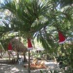 Palm grove on the beach