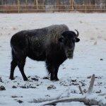 Yukon Wildlife Preserve 3