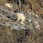 Yukon Wildlife Preserve 5