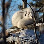Yukon Wildlife Preserve 6