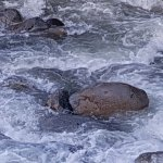 Zoomed in on rapids below our suite's sundeck.