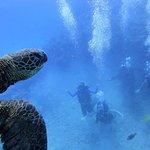 Foto de Rainbow Scuba Hawaii