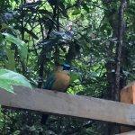 Photo de Monteverde Rustic Lodge