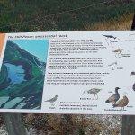 Silt Pond info
