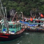 boats in Bai Tu Long Bay - this one was a retail shop