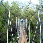 Zip Line - Bridge Trough Pine Trees