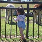 Feeding the animals at the nursery