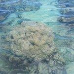 Photo of Blue Bay Marine Park