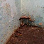 Photo de Fort Inn Guest House