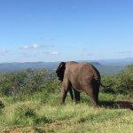 Photo of EuroZulu Guided Tours & Safaris
