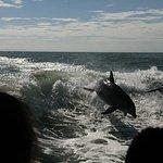 佛羅里達海豚之旅照片
