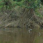 Giant River Otter-Pacaya Samiria-Amazon Experience