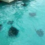 Cool shot of stingrays!