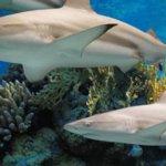 Sharks at National Aquarium