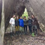 Biggest tree (Ceiba Pentandra) Pacaya Samiria Reserve - Amazon Experience