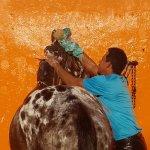Bonanza horse washing
