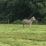 Photo of Lion Country Safari