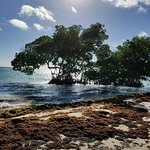 Foto de Puntacana Ecotours
