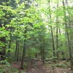Lye Brook Fallsの写真
