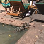 Our kids loved this little visitor as he went fishing in the small ponds by the pool area