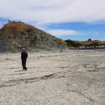 All of this exposed rock was once under the ocean but uplifted during the November 2016 earthqua