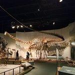 Photo de Denver Museum of Nature & Science
