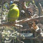 Bilde fra Kiwi Birdlife Park