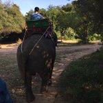 Photo de Elephant Village