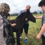 Meeting the new foal