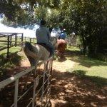 Foto Millstream Farm