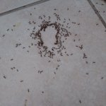 small part of ant problem