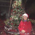 Christmas tree with pointsettias