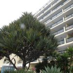 Photo de Pestana Ocean Bay